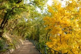 Urlaub in Meran: Tappeinerweg im Herbst
