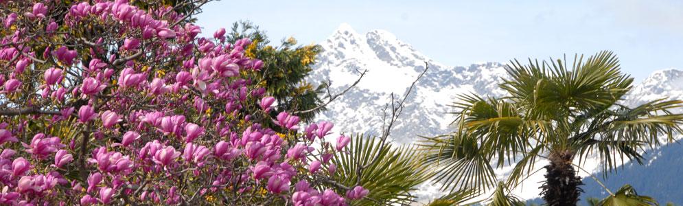 Der Frühling im Meraner Land - eine wunderschöne Bergkulisse