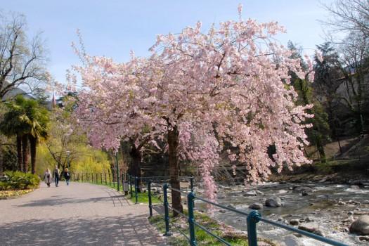 Meran im Frühling: Spazieren auf der blühenden Promenade